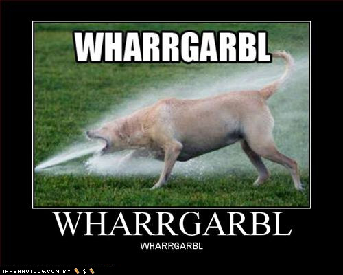 funny-dog-pictures-loldogs-wharrgarbl